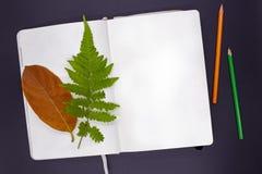 与蕨的空白的写生簿页和橙色秋天叶子和铅笔 图画或剪影大模型在台式视图 免版税库存图片