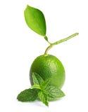与薄荷的叶子的绿色石灰 免版税图库摄影