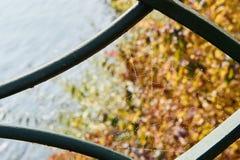 与薄雾下落的蜘蛛网 库存图片