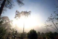 与薄雾的小山在早晨天空 库存照片