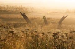 与薄雾的清早光 库存照片