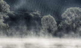 与薄雾的葡萄酒领域在前景 免版税库存照片