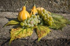与藤叶子的装饰黄色南瓜 免版税库存照片