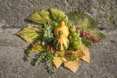 与藤叶子的装饰黄色南瓜 库存图片