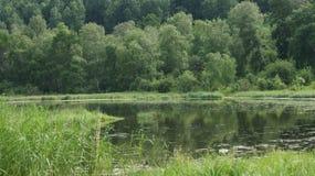与藤茎的沼泽 免版税库存图片