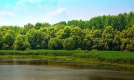 与藤茎的湖岸 免版税库存照片