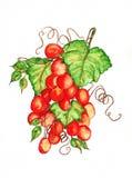 与藤水彩的葡萄 免版税库存图片