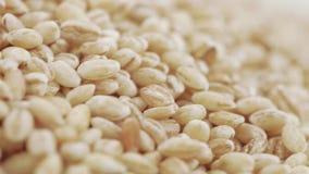 与虫的大麦米 股票录像