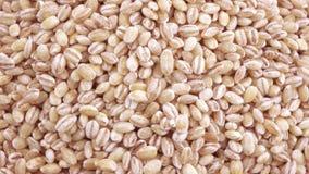 与虫的大麦米 股票视频