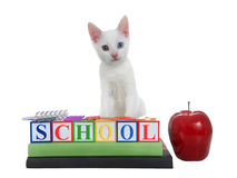 与虹膜异色症的白色小猫注视回到学校块书 库存图片