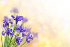 与虹膜的春天背景 免版税库存图片