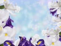 与虹膜花的花卉边界 免版税库存图片
