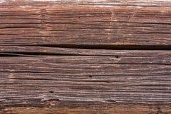 与蚀船虫的木纹理 库存图片