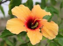 与蚂蚱的橙色花 免版税库存照片