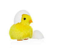 与蛋壳的鸡 图库摄影