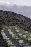 与蜂的五颜六色的蜂房在一个草甸在hight山区域 图库摄影