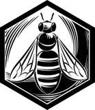 与蜂的六角形框架 库存照片