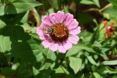 与蜂的紫色花 免版税库存照片