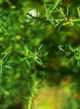与蜂的背景 免版税图库摄影