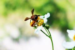 与蜂的花 图库摄影