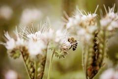 与蜂的花 库存图片
