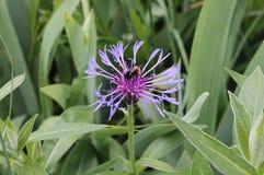 与蜂的花 免版税库存图片