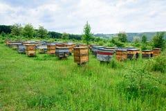 与蜂的蜂房在蜂房在森林的郊区 图库摄影