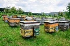 与蜂的蜂房在蜂房在森林的郊区 免版税图库摄影