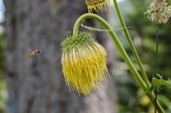 与蜂的野花 免版税库存照片