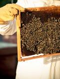 与蜂的养蜂业框架 免版税库存照片
