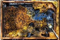 与蜂蜜梳子框架的静物画和在黑背景的小钢匙子 图库摄影