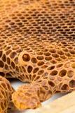 与蜂蜡的巢框架 免版税库存图片