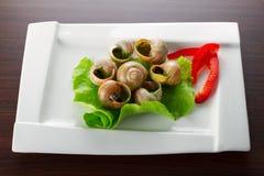 与蜗牛的正餐在牌照 免版税图库摄影
