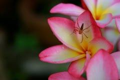 与蜘蛛的花 免版税库存图片