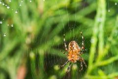 与蜘蛛网的蜘蛛 库存照片