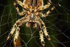 与蜘蛛网的蜘蛛 库存图片