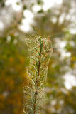 与蜘蛛网的Branche 库存照片
