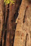 与蜥蜴的树词根 免版税图库摄影