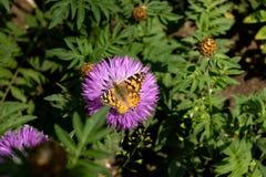 与蝴蝶的紫色花 免版税库存图片