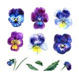 与蝴蝶花的水彩花卉集合 与叶子、在白色和分支的手画例证隔绝的中提琴花 免版税库存照片