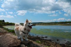与蝶形领结的Pomeranian在水旁边的墙壁上 免版税库存照片