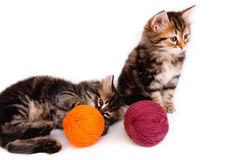 与螺纹球的两只逗人喜爱的小猫在白色的 免版税图库摄影