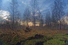 与蠕动的森林和沼泽的有雾的风景 免版税库存图片
