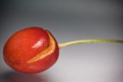 与蠕虫叮咬踪影的新鲜的可口鲜美甜樱桃在灰色梯度背景的 免版税库存图片