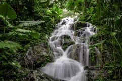 与行动迷离的热带瀑布在墨西哥雨林 免版税图库摄影