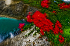 与行动迷离的热带花 免版税库存图片