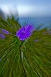 与行动迷离的紫色花 免版税库存图片