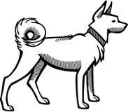 与衣领的波美丝毛狗狗 皇族释放例证