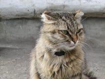 与衣领的街道猫 免版税图库摄影