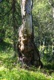 与表示的一棵树 免版税库存照片
